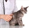 Ветеринарные клиники в Усть-Цильме